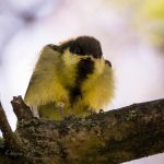 All fluffed up by OliverBPhotography