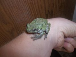 Le Frog by melfurny