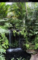 Fairchild Botanical Gardens Stock 17 by Cassy-Blue