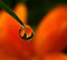 my lovely droplet by sinanTR