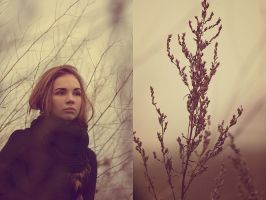 branches. by Altingfest