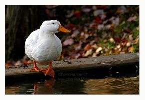 Sitting Duck by Goodbye-kitty975