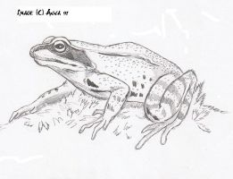 Frog by Anna-XIII