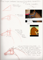 Horse Head Tutorial by Hyourin