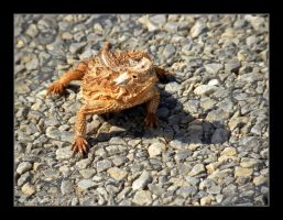 Horned Toad by SuicideBySafetyPin