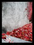 Fall Wall by Nightline