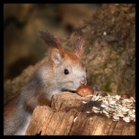 Yummy chestnut by XanaduPhotography