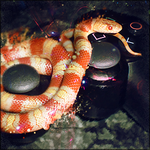 Gaming Snake by The35thChamber