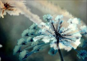 Frozen Flowers In March by eskile