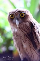 Philippine Eagle Owl by jovifactor