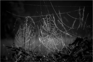 Spider City by ShaunJersey