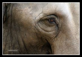 elephant eye by declaudi