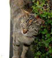 Stray Kitty Is Itchy by Reskiy