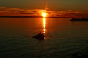 Seagull Sunset On A Rock by wolfwings1