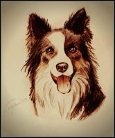Border Collie by gilly15