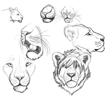 Lion Sketches by xDoglate