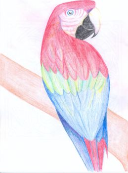 Parrot by Pencil-of-Power