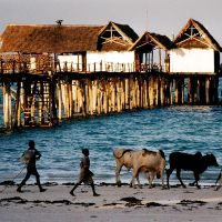 Shepherding In The Beach by CarlosBecerra