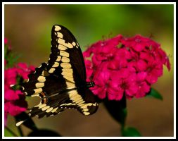 Butterfly. by justfrog