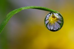 Dew Drop Refraction 14 by Alliec