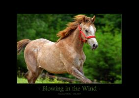 Blowing in the Wind by UnUnPentium115