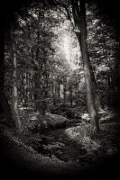 Into the woods... by Milanogreg