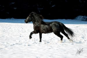 Snow action by OceanEagle