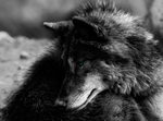 Blinking Wolf Animation by FrozenAltars