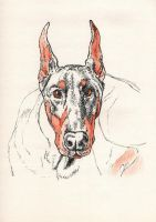 Doberman by MischiefSketcher