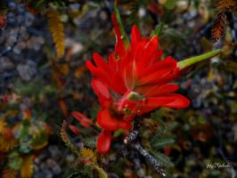 Grand Canyons .........wild flowers 3 by gintautegitte69