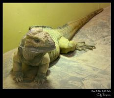 Show Me That Reptile Smile by FearDesign