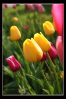 Tulips-buns-2 by wistine