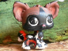 Mosi the African Wild Dog by EdgeofFear