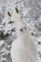 white and smile by Vikarus