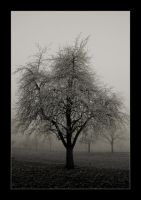 Tree in the fog II by michaelwalker