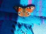 Peacock Butterfly by FoolsGolde