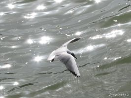 The fly of the seagull by Momotte2