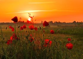 Red sunrise. by lica20