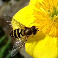 yellow by Insect-Lovers-Club