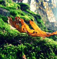 Leaf... by MateuszPisarski