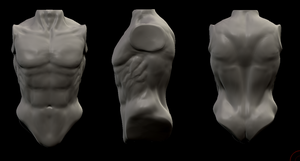 Zbrush Human Torso by DrSketch