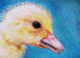 Just Ducky ATC by SandieBlair