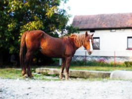 horse by Just4guitar