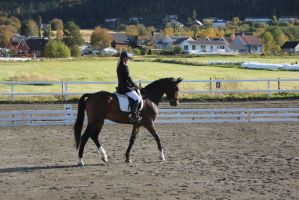 Dressage 9 by Chance-STOCK