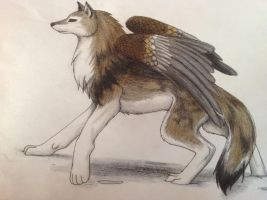 Wingy Wolfie. :3 by Goldfirewolf