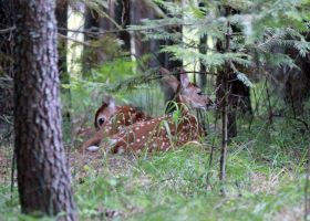 Baby-deer by photogatlarge