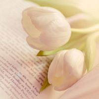 Tulips And Reading....Love by Mfotografie