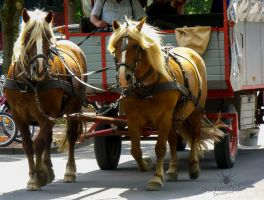 Two Carriage Horses :3 by TheFunnySpider