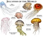 Jellyfish of the World by rogerdhall