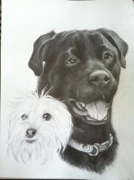 dog drawing by kittycat727